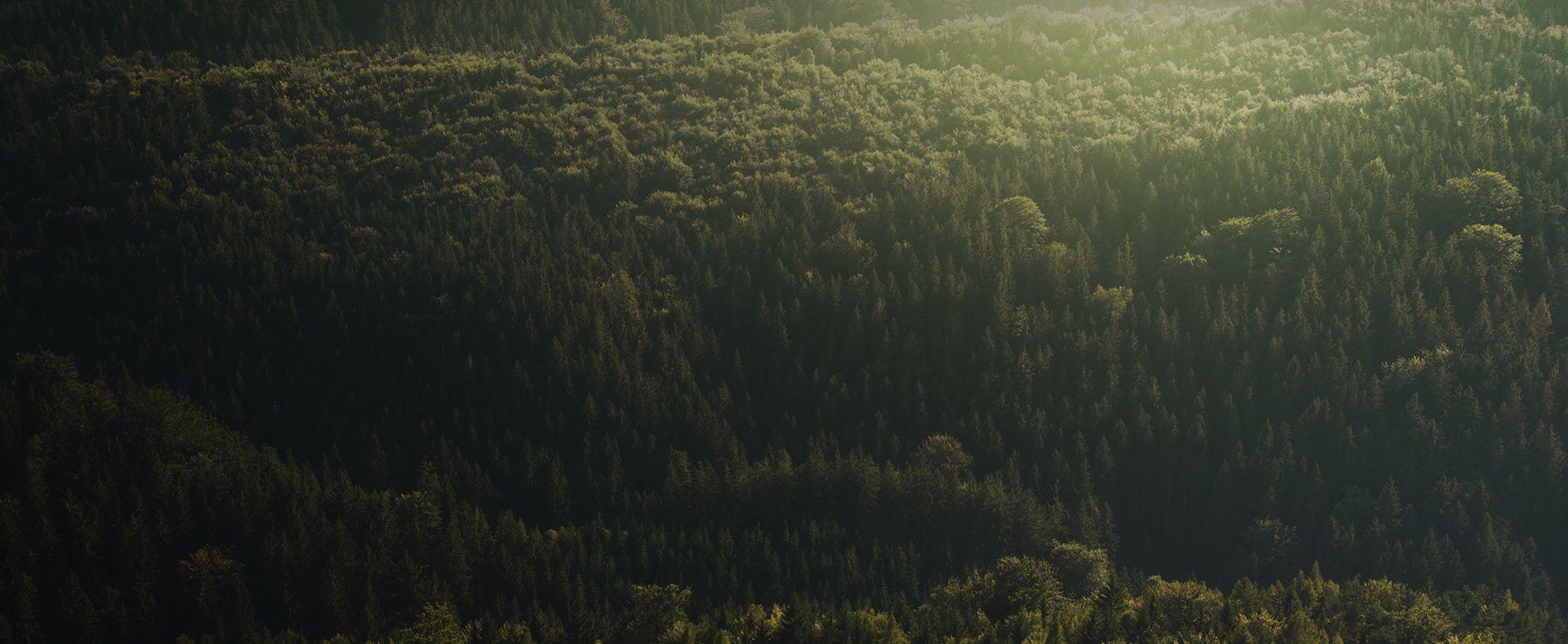 Photographie d'une forêt illustrant la politique RSE du Groupe Marck.